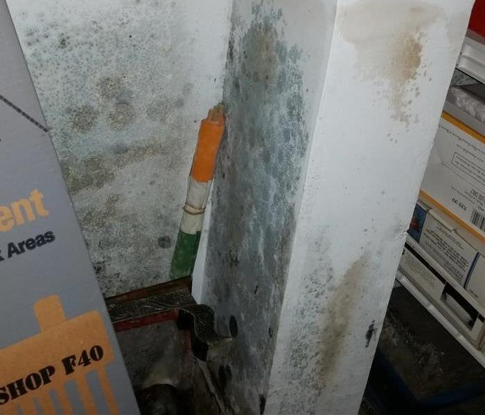 Mold Remediation Cautionary steps when mold is suspected